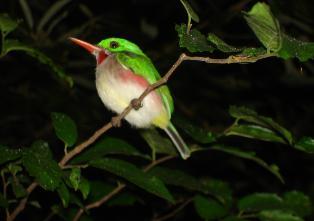 Realizan estudio biofísico para declarar Mata de Maíz reserva ecológica